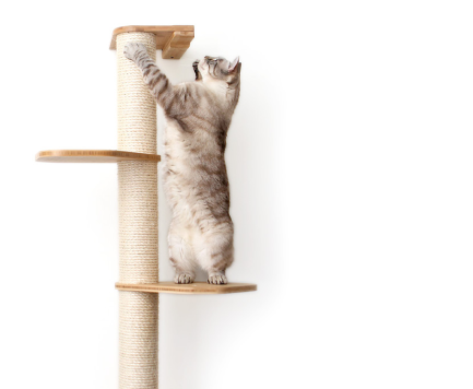 Catastrophic Creations Modern Cat, Wall Mounted Cat Furniture Nz
