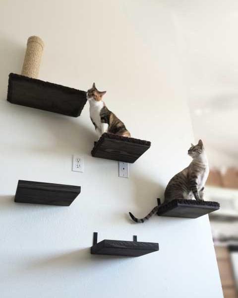 12-inch-solid-cat-shelf-2