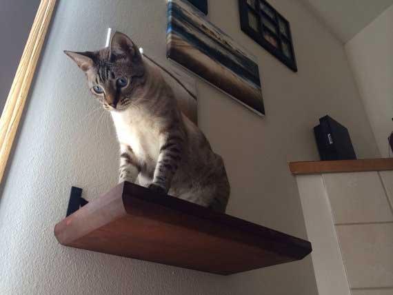 18 Quot Solid Cat Shelf ⋆ Catastrophic Creations