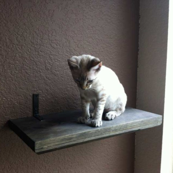 18 Quot Solid Cat Shelf ⋆ Catastrophic Creations