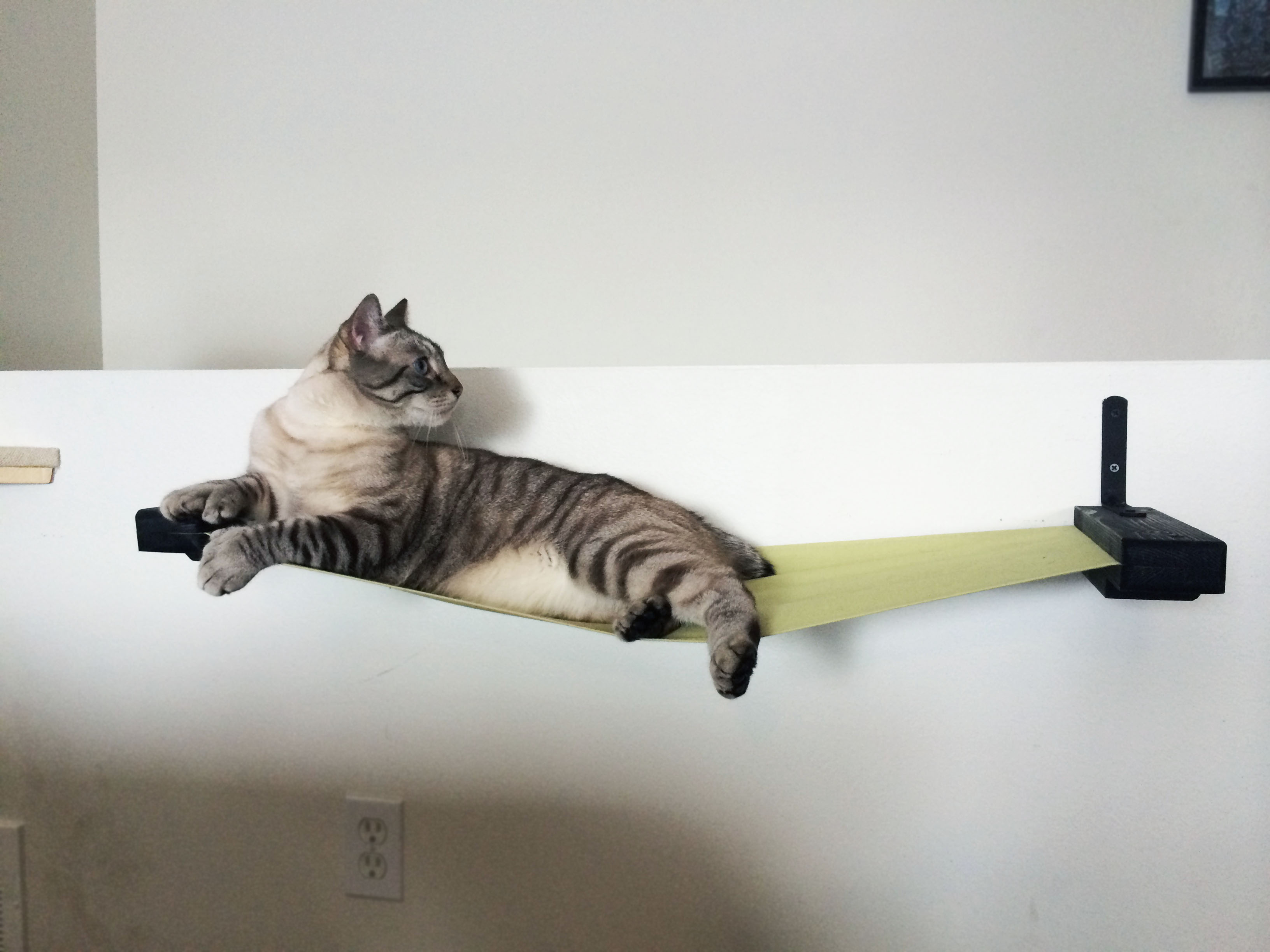 How to keep cats off furniture with vinegar