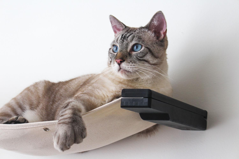 cat laying on wall mounted cat hammock