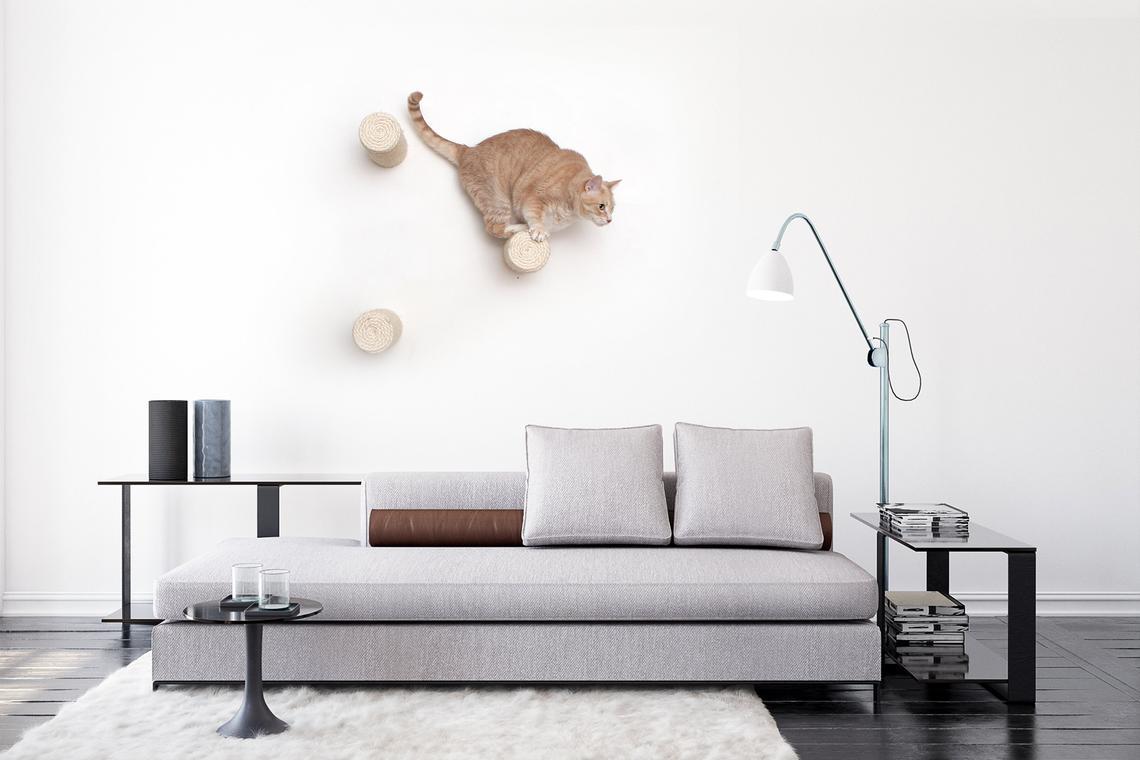 orange cat on wall mounted floating sisal poles in living room