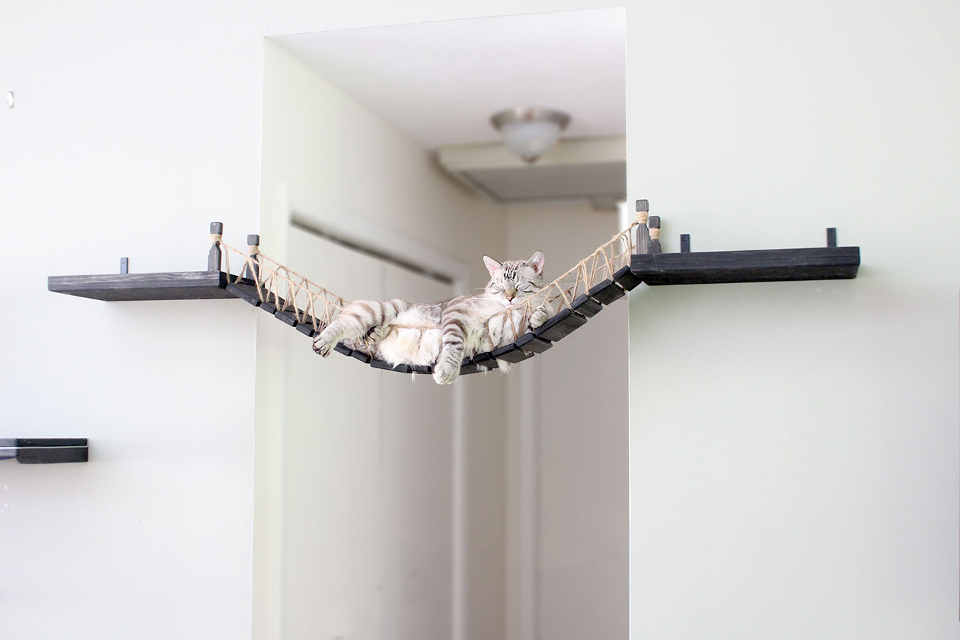 Roped Cat Bridge ⋆ Catastrophic Creations