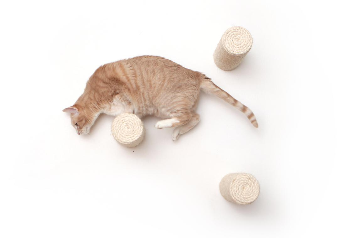 cat on wall mounted floating sisal poles