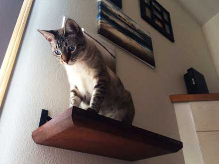 Cat Bridge Furnitures