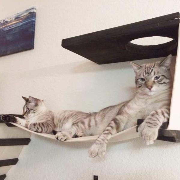 cat-playplace-2