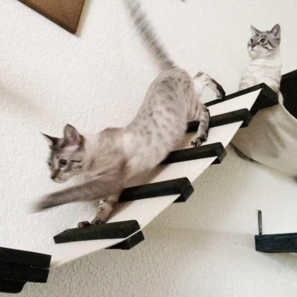 cat-playplace-5