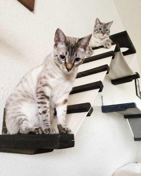 cat-playplace-6