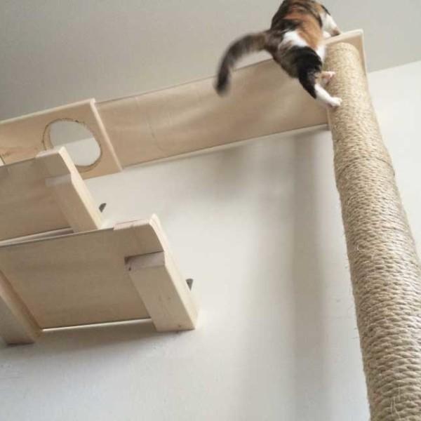 cat-sky-track-2