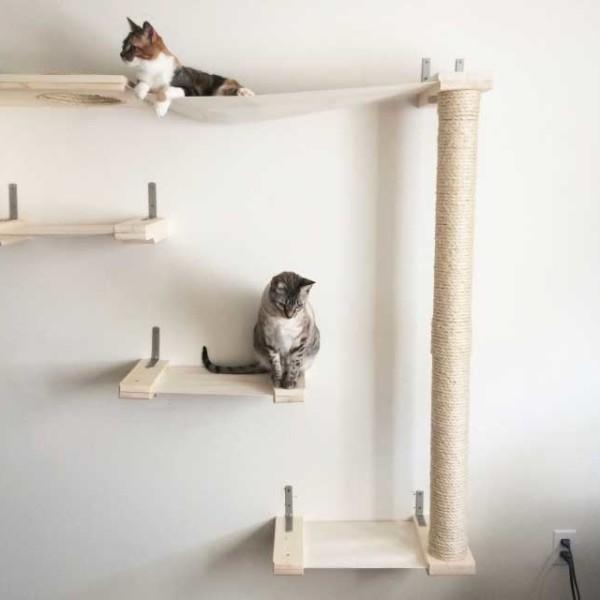 cat-sky-track-4