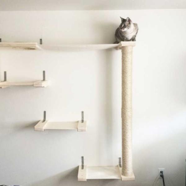 cat-sky-track-7