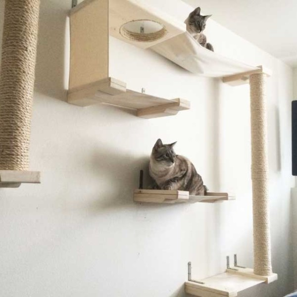 Cat Sky Track ⋆ Catastrophic Creations