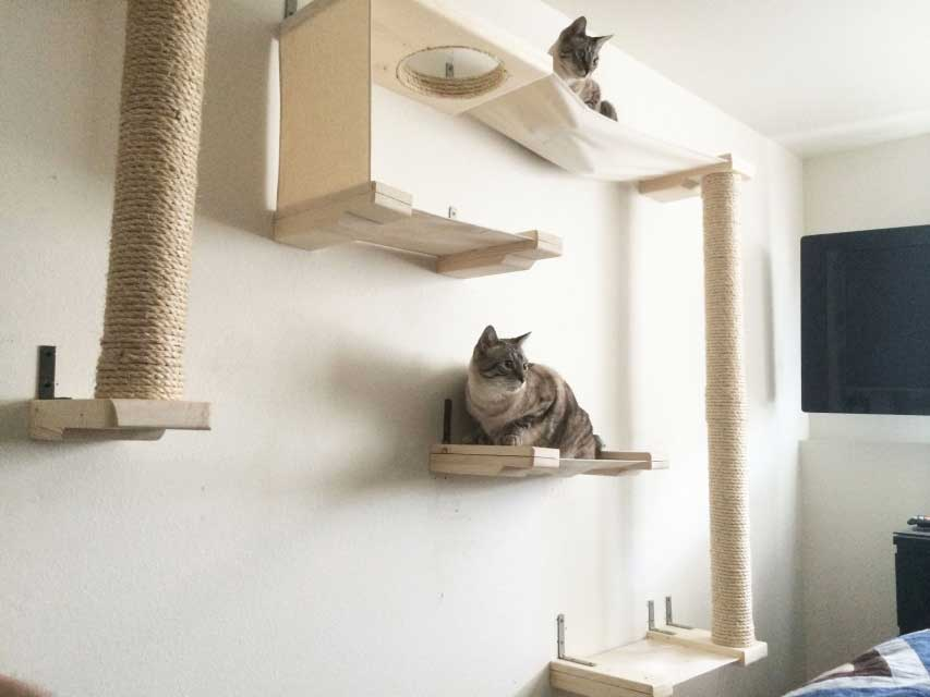 Cat Sky Track Catastrophic Creations