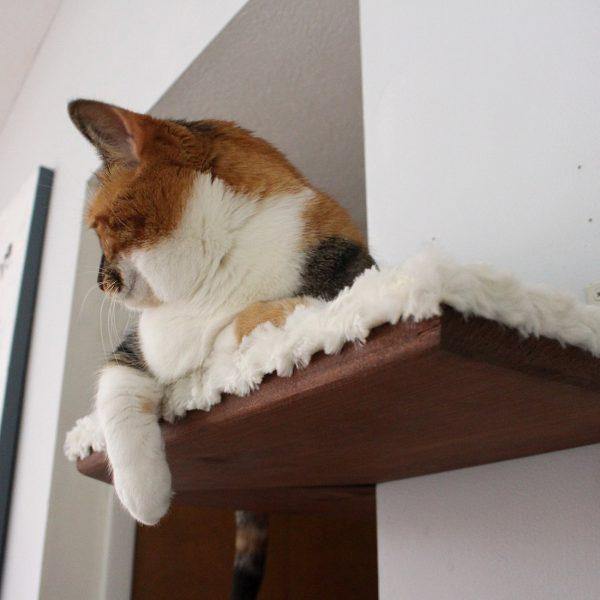 Dog Ate Corner Of Rug: Fabric-covered Corner Cat Shelf ⋆ Catastrophic Creations