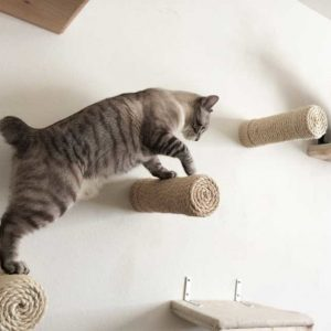 Unconventional Cat Furniture For Feline Instincts