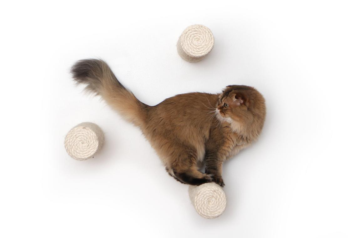 fluffy brown cat on wall mounted floating sisal poles