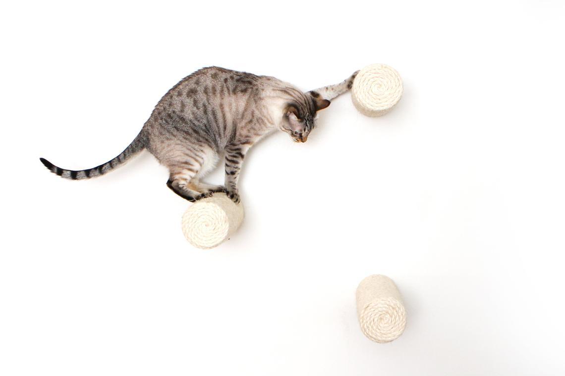 gray tabby cat on wall mounted floating sisal pole