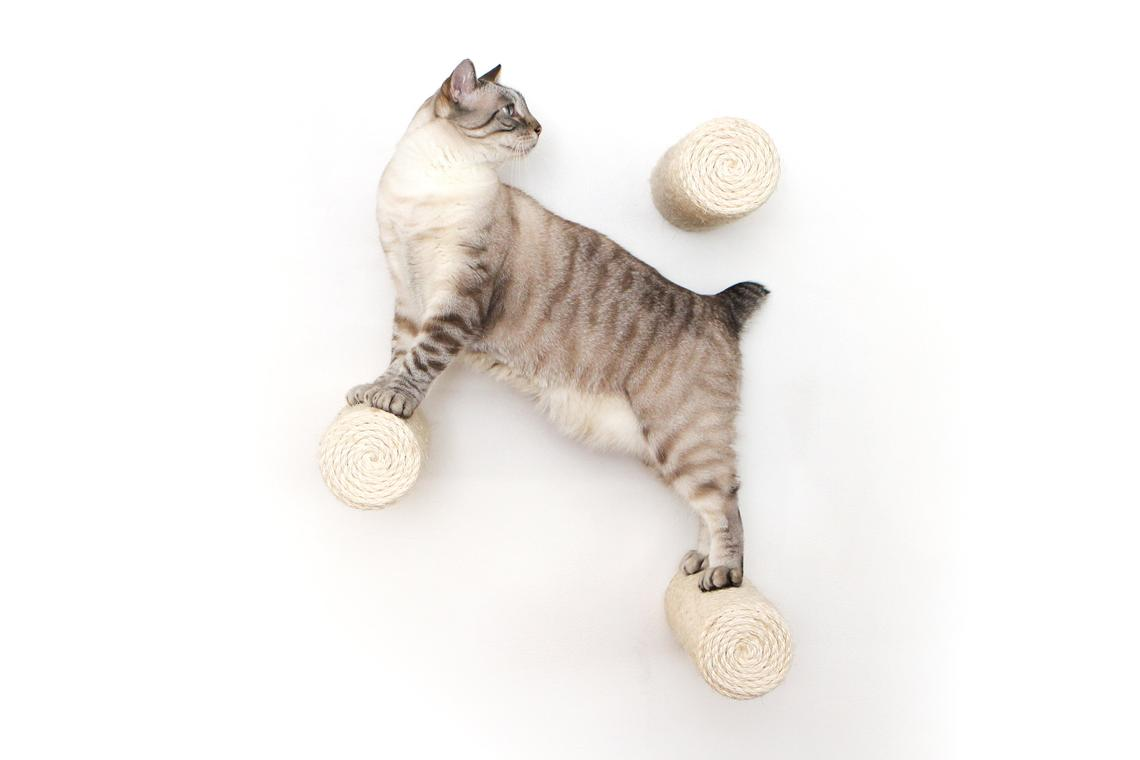 tan cat on floating sisal pole wall mounted cat furniture