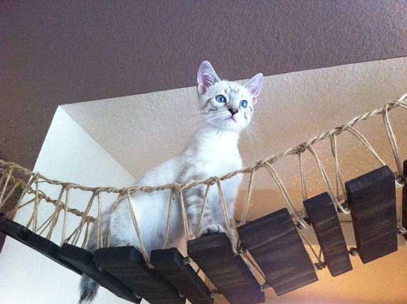 product-indiana-jones-cat-bridge-6