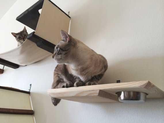 Purina One Sensitive Systems Cat Food Alternative