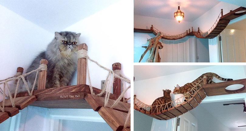 photo collage of cats on cat bridges