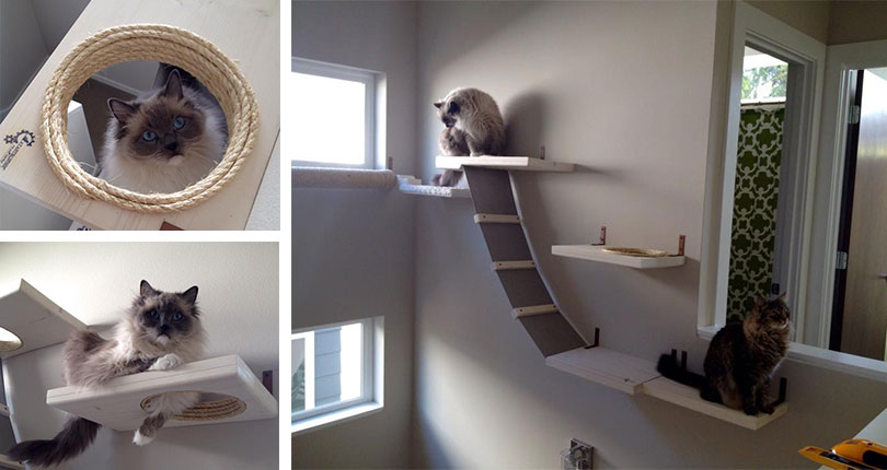 photo collage of cats playing on wall mounted cat furniture