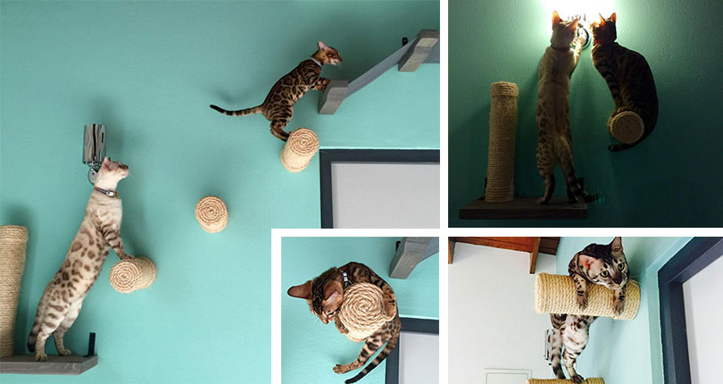 photo collage of very adorable kittens playing on floating scratching posts