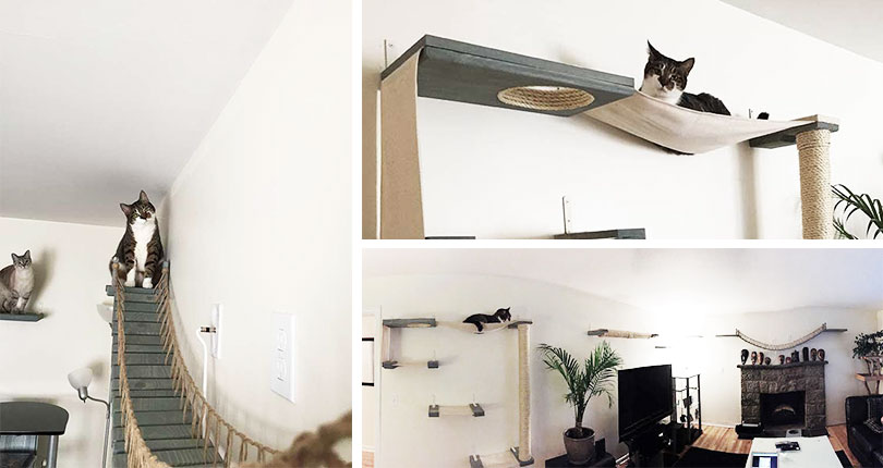 photo collage of cats on wall mounted cat furniture