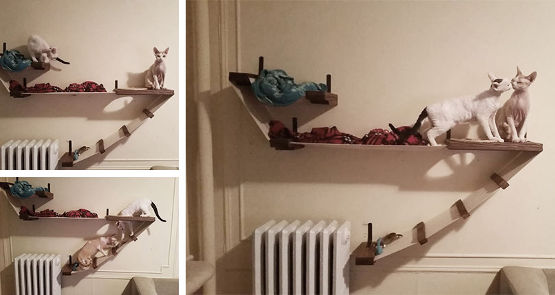 two cute cats playing on wall mounted cat furniture