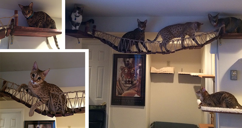 photo collage of cats playing on cat bridges