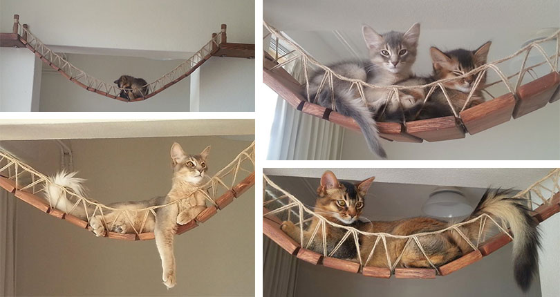 photo collage of cats laying on cat bridges