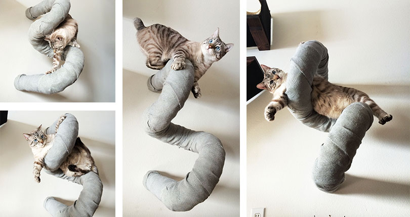 cat in a catastrophic creation