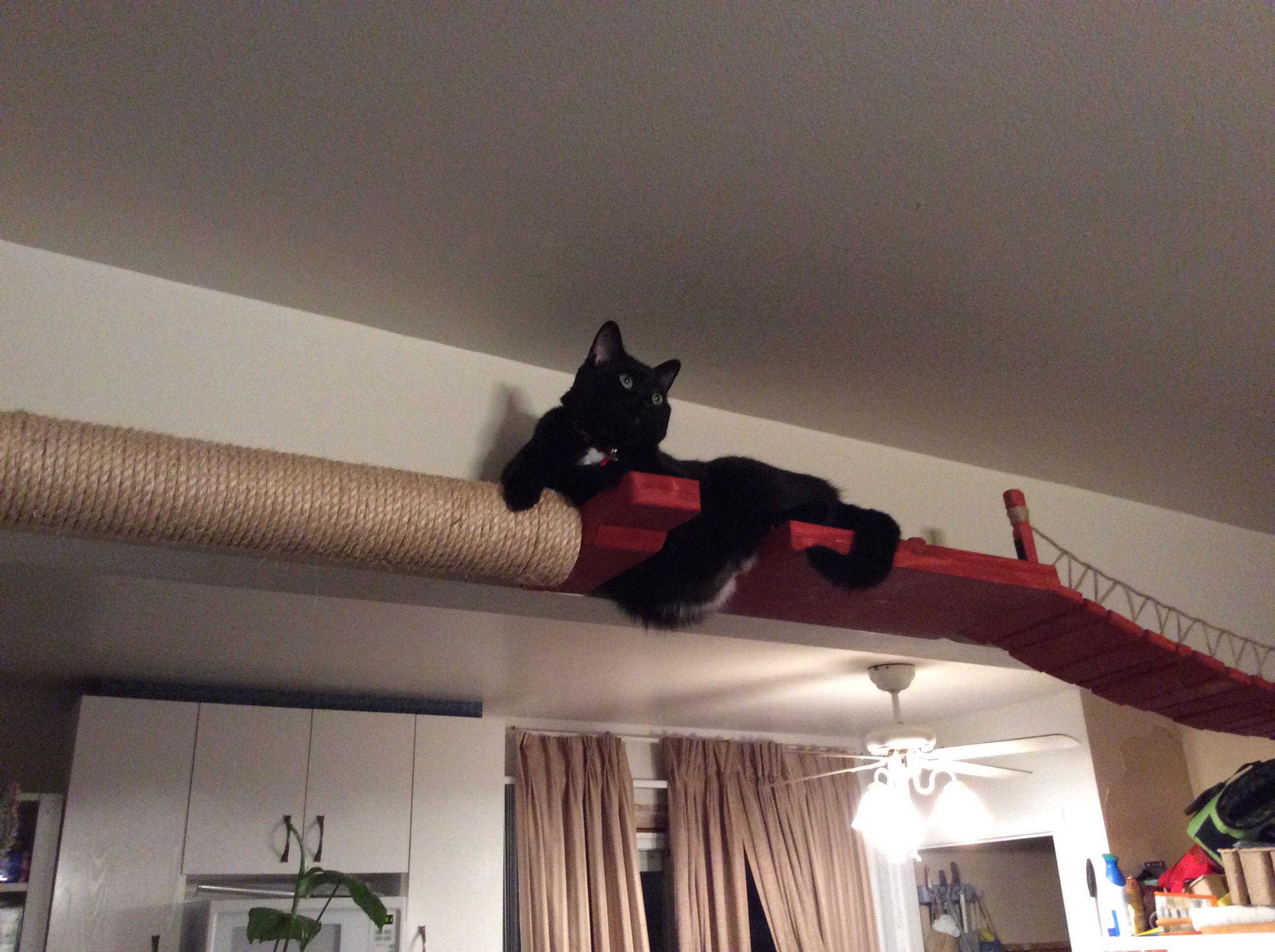 Cat Bridge Layout Ideas  U22c6 Catastrophic Creations
