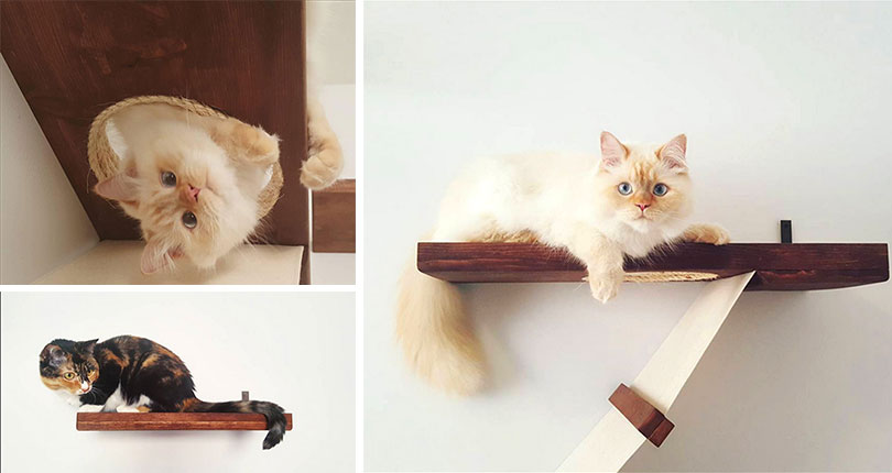 photo collage of very cute kittens on wall mounted cat furniture