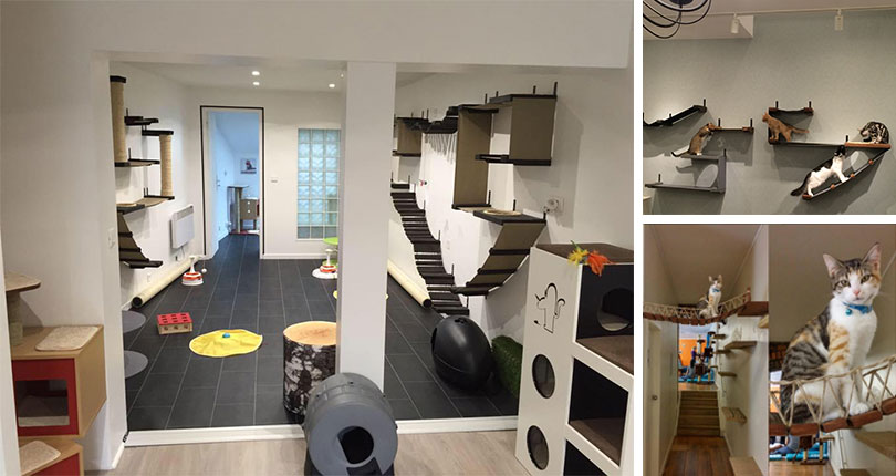 photo collage of installed wall mounted cat complexes with kittens