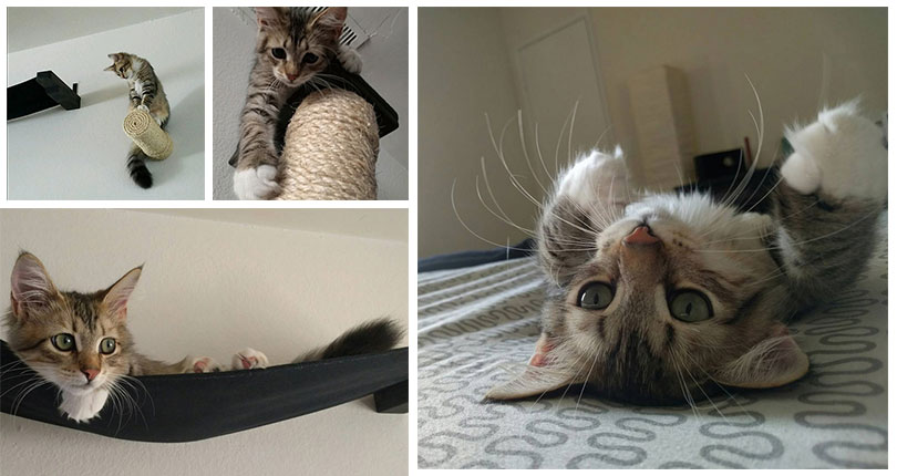 photo collage of very cute kitten playing on wall mounted cat furniture