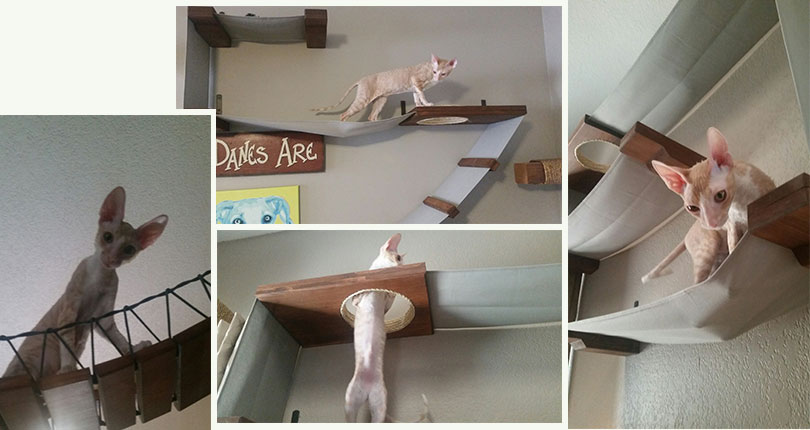 photo collage of naked kitty exploring wall mounted cat furniture