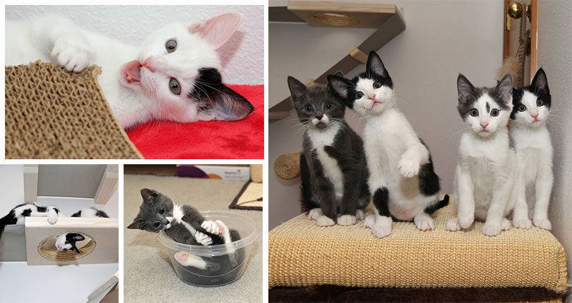 photo collage of very cute kittens