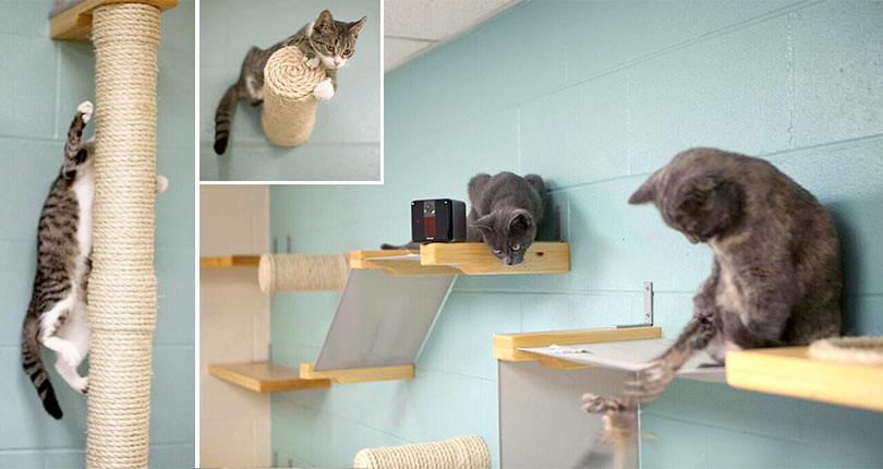 photo collage of kittens playing on wall mounted cat furniture
