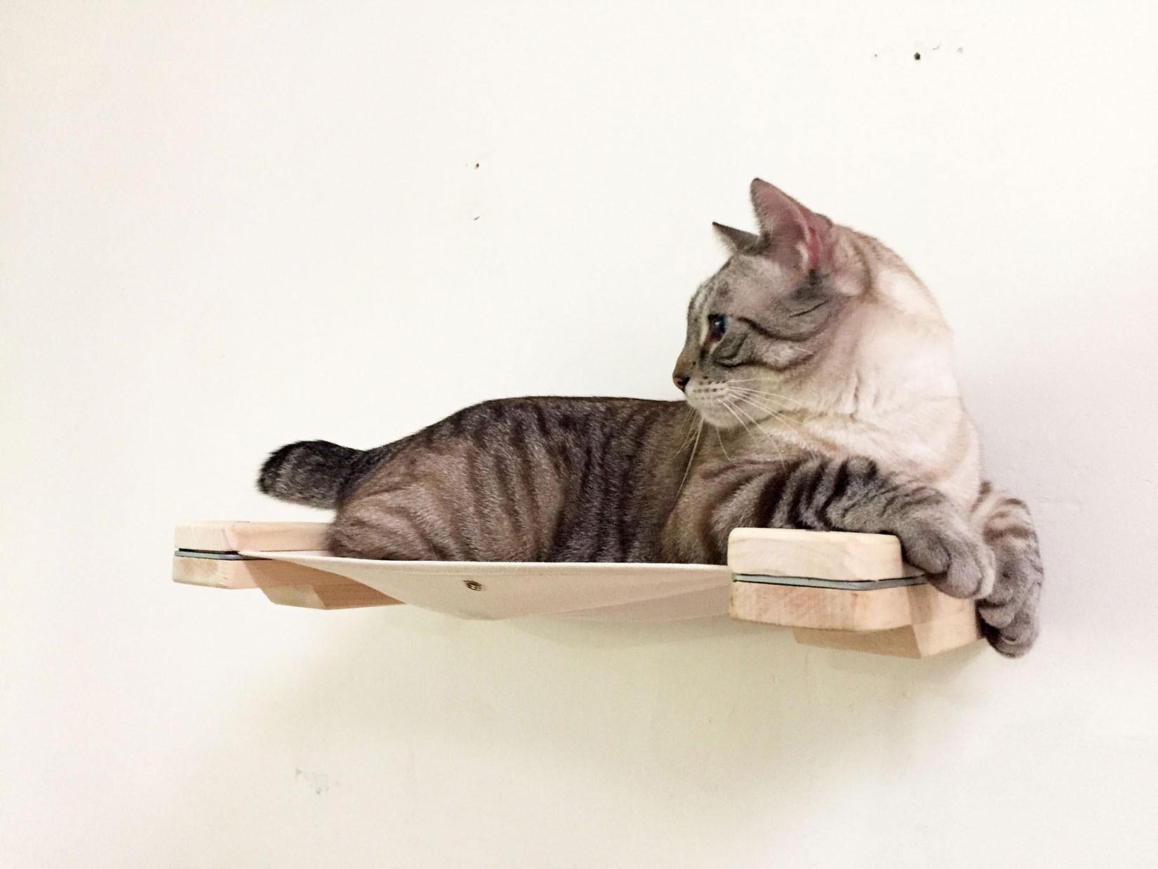 Cat Mod Lounge ⋆ Catastrophic Creations