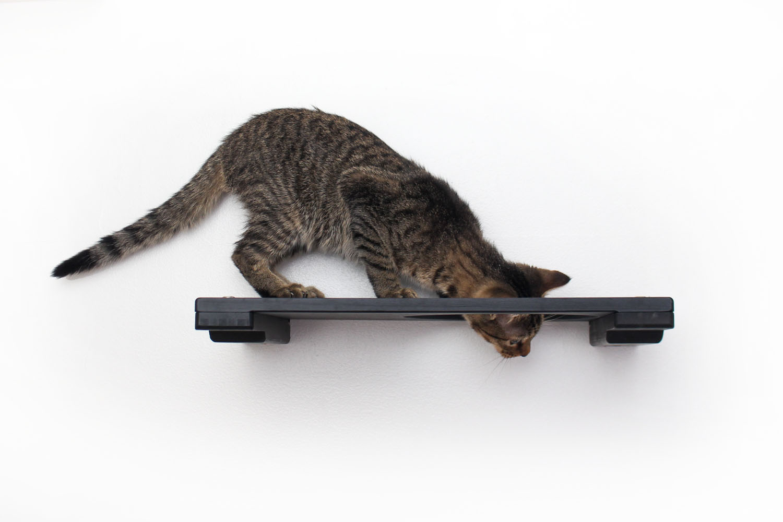 cat peeking through escape hatch on wall mounted cat shelf