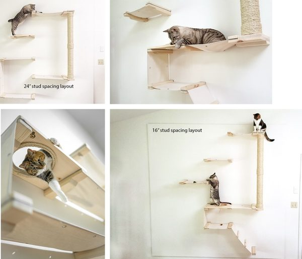 Cat Mod1