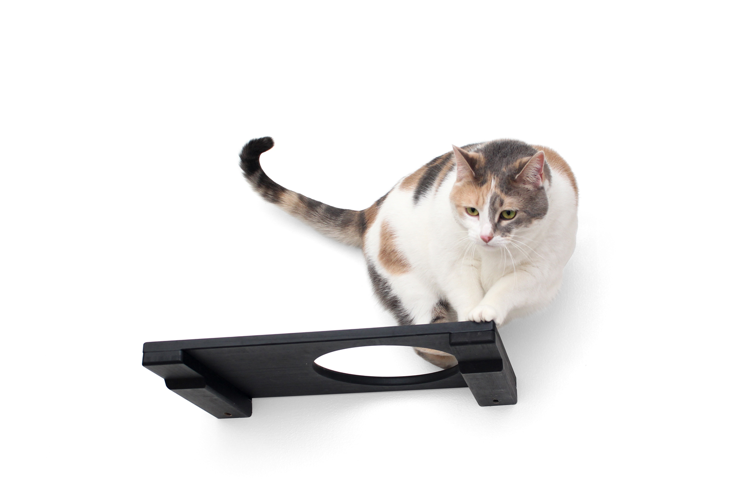 wall mounted 18 inch escape hatch with calico cat