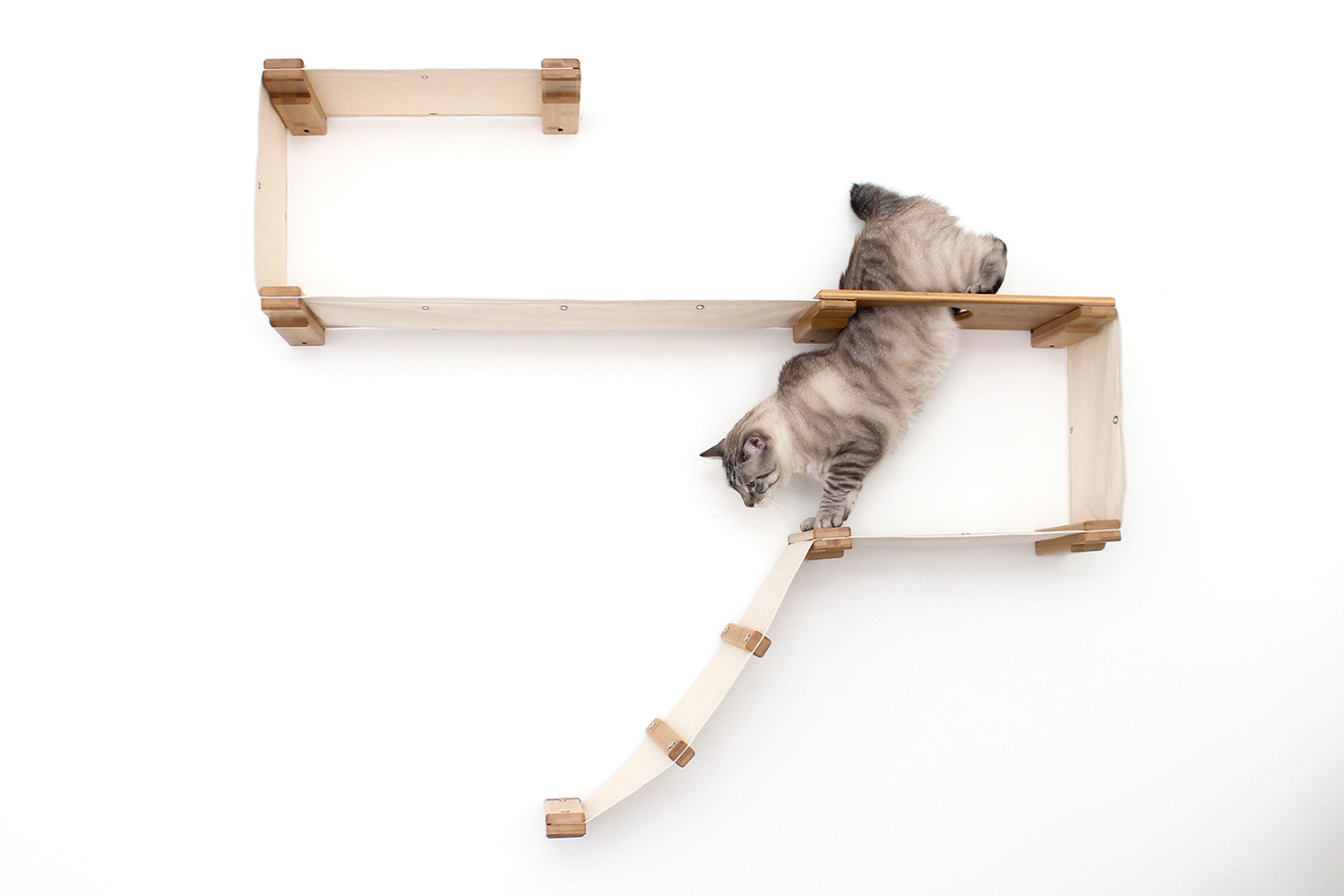 cat climbing through escape hatch of wall mounted cat complex