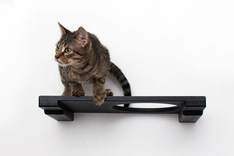 cat sitting on wall mounted escape hatch shelf