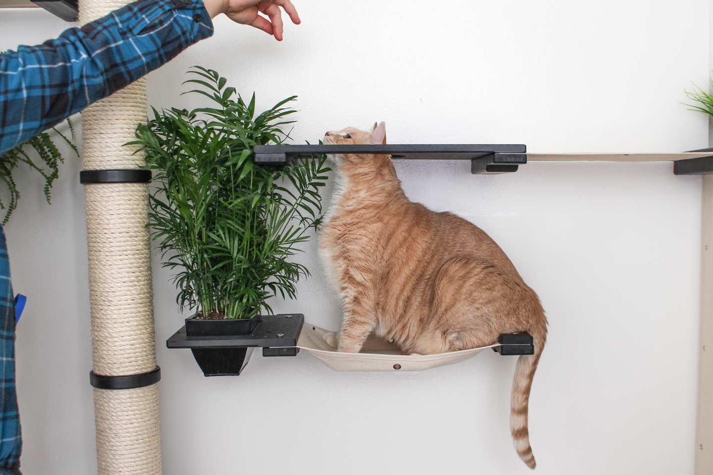 cat playing on wall mounted cat furniture