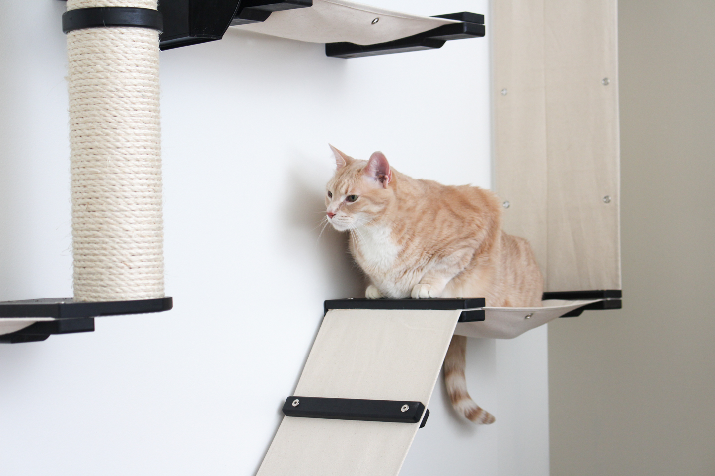 cat hanging out on wall mounted cat furniture