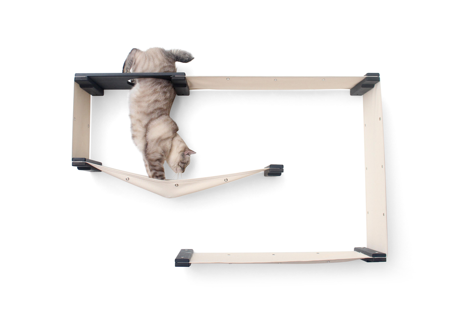 cat climbing through escape hatch of wall mounted cat furniture