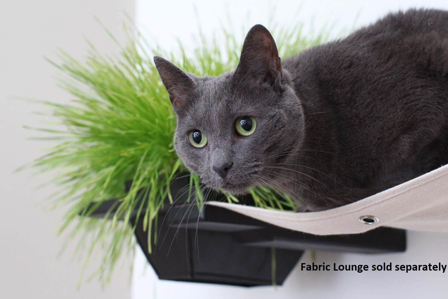 This photo is a close up of a cat sitting on a hammock near a Planter. This image shows the planter in Onyx, a black stain.
